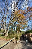 Tourists Visit Arashiyama On December 09, 2014 In Kyoto