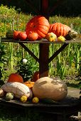 Beautiful Pumpkins