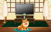 stock photo of dog-house  - A cute dog inside the house in front of the TV - JPG
