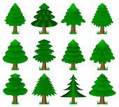 vector conifers, coniferous trees