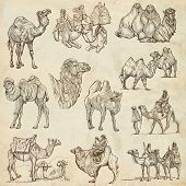 stock photo of freehand drawing  - CAMELS  - JPG