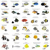 stock photo of species  - Collection of different species of marine fish - JPG