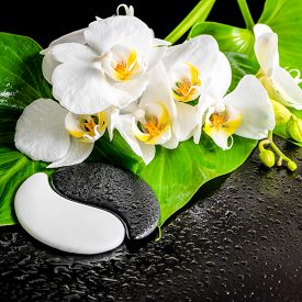 foto of yin  - spa concept of white orchid flower phalaenopsis green leaf with dew and Yin-Yang of stone texture on black background closeup ** Note: Shallow depth of field - JPG