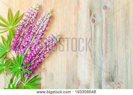 poster of Lupine summer flowers on the wooden background. Selective focus at the lupine flowers. Summer flower background with pink colorful summer flowers of lupine. Summer flowers on the wooden surface, summer nature background