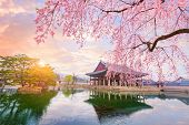 Gyeongbokgung Palace With Cherry Blossom Tree In Spring Time In Seoul City Of Korea, South Korea. poster