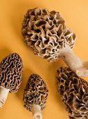 stock photo of morchella mushrooms  - Freshly picked flavorful morel mushrooms - JPG