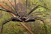 Not A Whip Scorpion