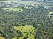 Aerial View Of Hatfield Forest poster