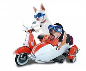 image of sidecar  - two chihuahuas in a scooter and sidecar - JPG