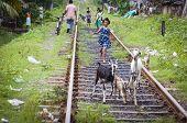 asiatische sorglos lächelnd mädchen spielt auf Eisenbahnstrecken