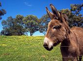 Donkey With Flowers