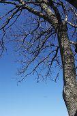 Single Tree Waiting The Spring