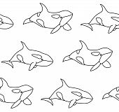 Vector Seamless Pattern Of Killer Whale In Outline Style. Line Art Cartoon Orca On White Background poster