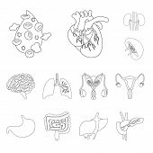 Vector Design Of Anatomy And Organ Sign. Set Of Anatomy And Medical Stock Symbol For Web. poster