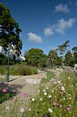 Flower Beds And Shrubs In The Lower Gardens At Bournemouth On The Dorset Coast poster
