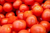 Red Tomatoes. A Lot Of Tomato. Red Vegetables. Ripe Tomatoes. Mountain Tomato Healthy Food. Crop Of  poster