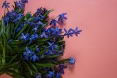 Blue Flower. Flower In Garden At Sunny Summer Or Spring Day. Flower For Postcard Beauty Decoration A poster