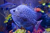 Exotic Fish In Aquarium