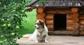 Cão perto Doghouse