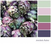 Artichoke background colour palette with complimentary swatches.