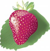 Vector ripe strawberry