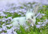 Cute Baby Rabbit