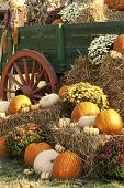 Antique Wagon and Pumpkin Display