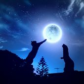 image of goodnight  - Silhouettes of animals in night sky with full moon - JPG