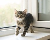 image of heartwarming  - Striped kitten gently and slowly steals the window
