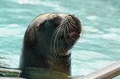 Adult Seal
