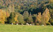 France, Landscape Of Saint Lambert Des Bois In Les Yvelines