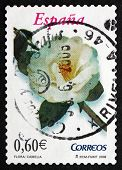 Postage Stamp Spain 2008 Camellia, Flowering Plant