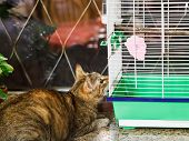 Cat Watching Bird In Cage