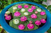 floating lotus flowers in Jim Thompson House museum garden bangkok thailand