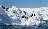 Adeliepinguine auf Eisberges
