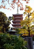 TOKYO JAPAN - NOV 21: The Buddhist Temple Senso-ji is the symbol of Asakusa