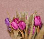 Photo Illustration of Spring Tulips on Damask Background in Fuscia and Purple