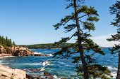 Pines Along Rocky Coast By Blue Sea