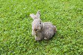 Straw Rabbit