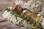 Yarrow Oil In A Bottle With Flowers On The Table. Horizontal