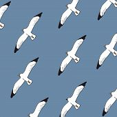 seagulls background