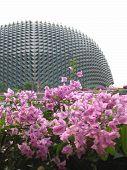 Esplanade  Aka Durian @ Singapore