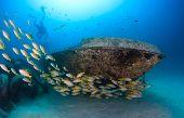 Tropical Fish Near A Wreck
