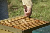 Control Of The Bee Hive