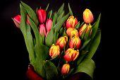 Orange, Yellow, Red Tulips