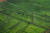 Cultivated green fields. Central europe. Aerial view.
