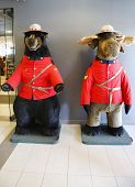 Black bear and moose dressed in Royal Canadian Mounted Police uniform in Jasper National Park