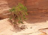 Green tree in Colored Canyon.