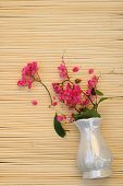 Coral Vine Flouring From Vase