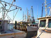Shrimp fishing boats at dock